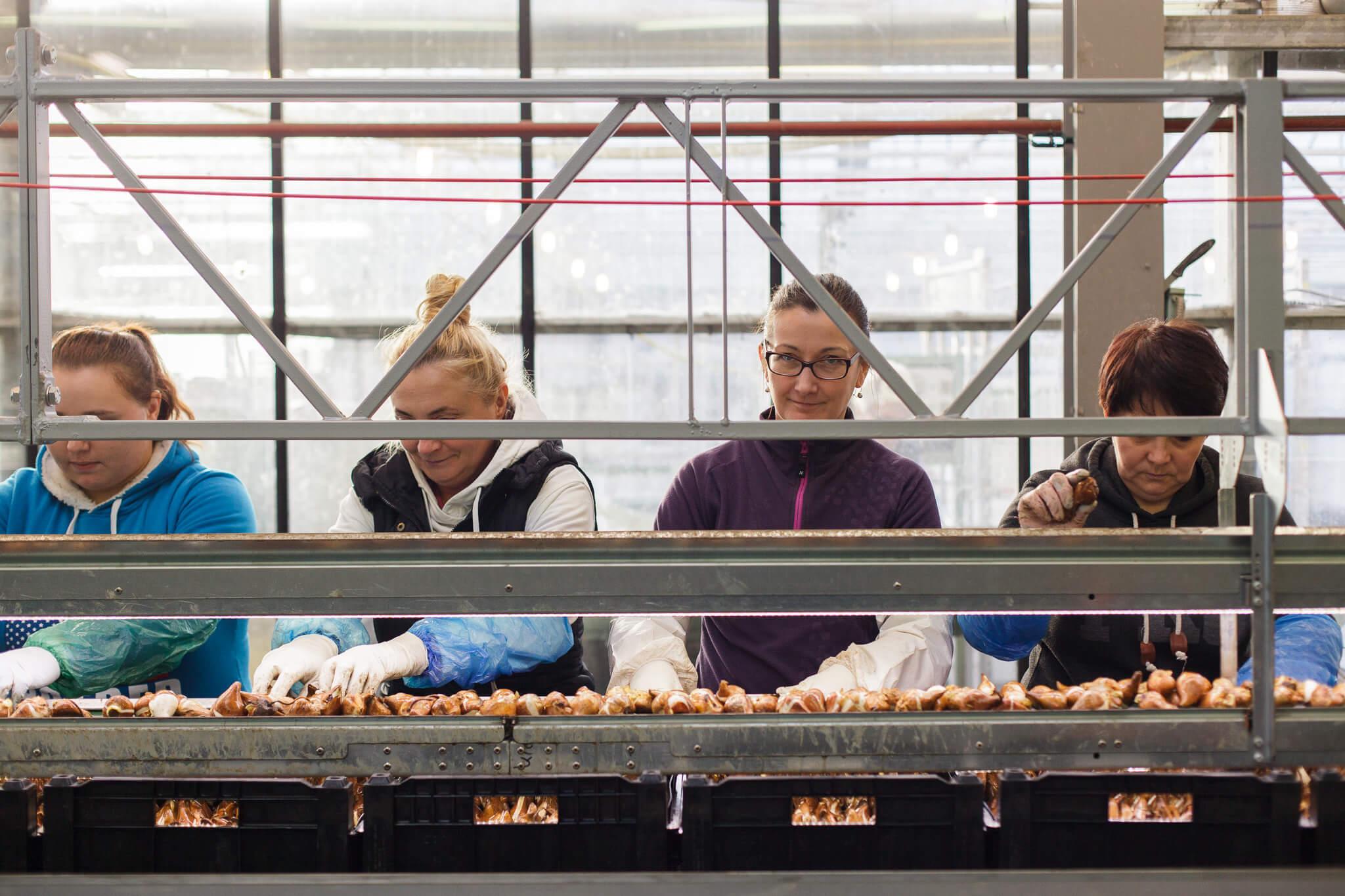 Tulpen.nl_7664_webHD
