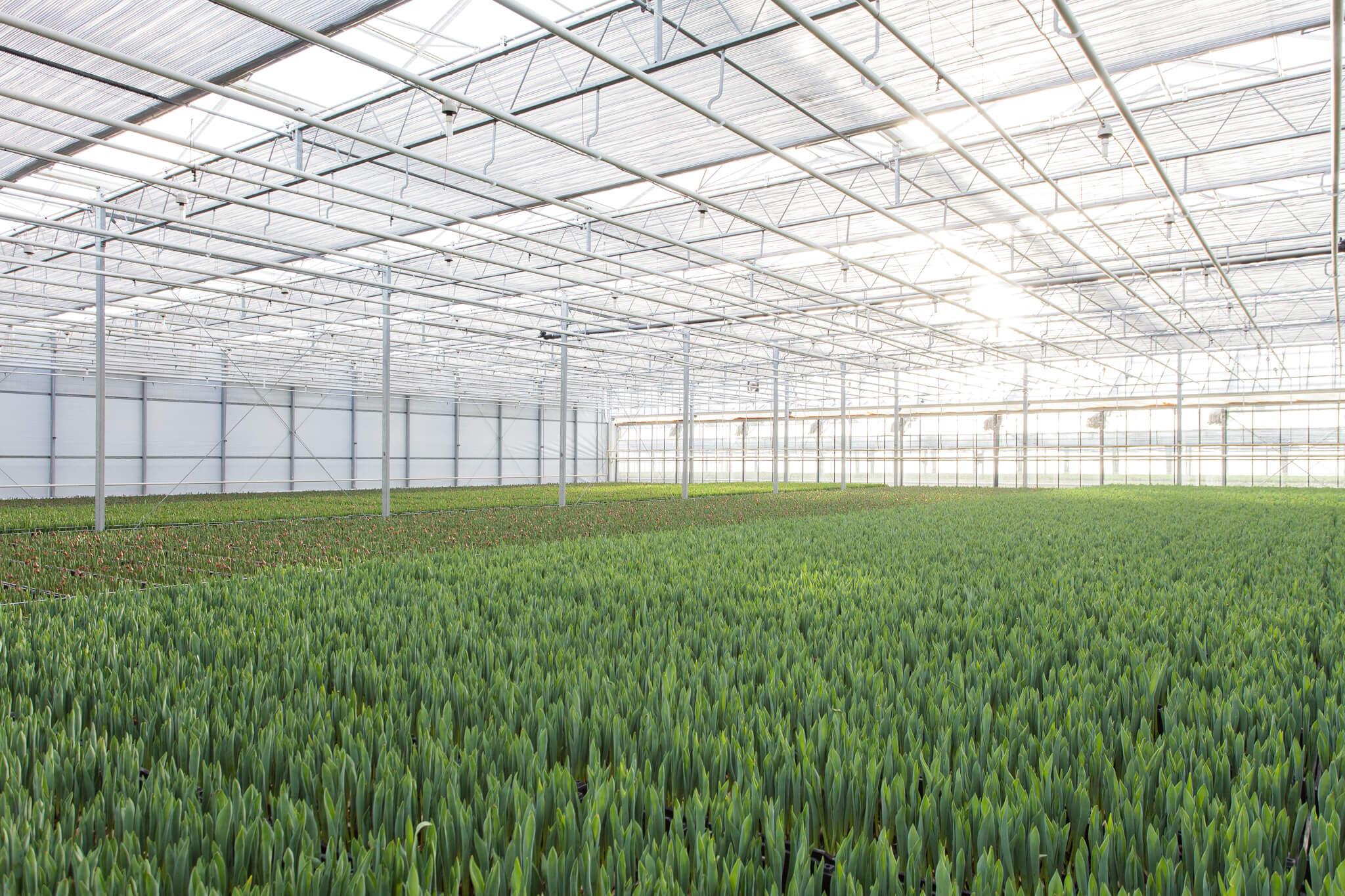 Tulpen.nl_7704_webHD